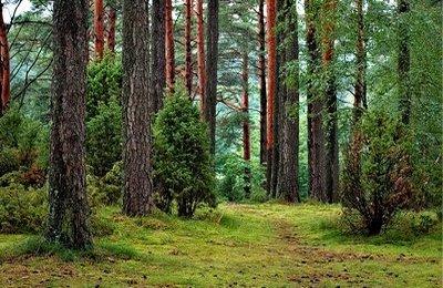 Grunty leśne, grunty rolne